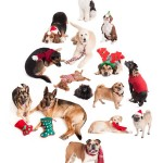 christmas-dogs-collage