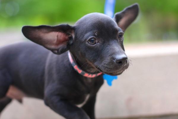 © Emily Lynn Photography, Doxie-puppy