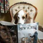 Toronto-Lifestyle-Dog-Photographer