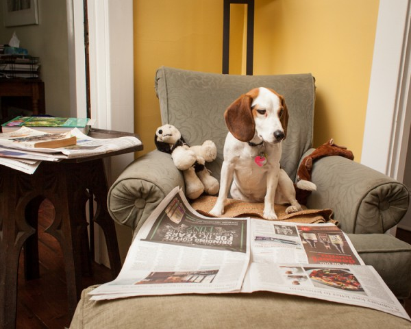 © Sean Howard Photography, Toronto-Lifestyle-Dog-Photographer