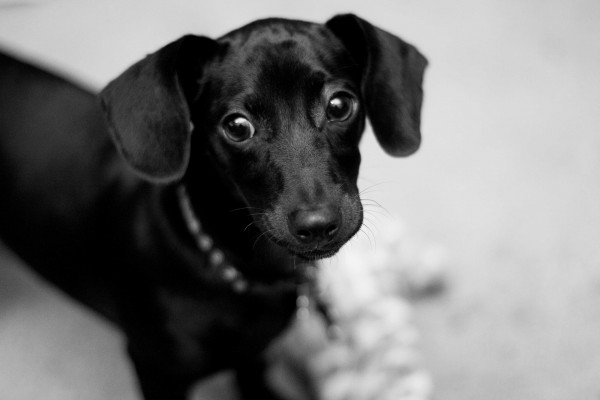 © Emily Lynn Photography, Huntsville-Pet-Portraits