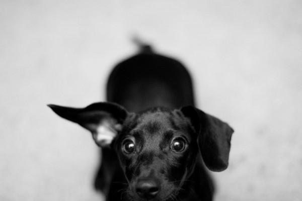 © Emily Lynn Photography, Huntsville-Family-Pet-Portraits
