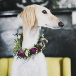 © Willow & Co., wedding-dog, Saluki