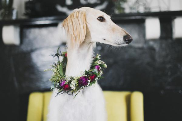 © Willow & Co., wedding-dog, Saluki