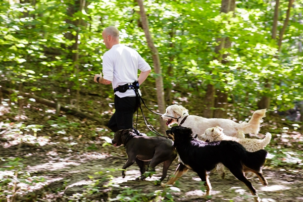 © Jen Madigan Photography, Man-running-with-dogs