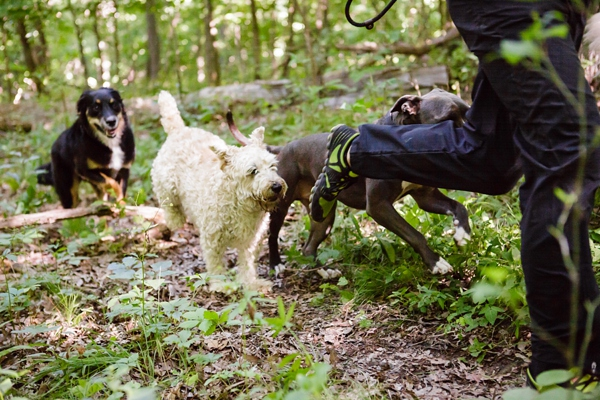 © Jen Madigan Photography, Off-leash-running