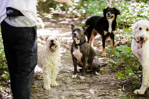 © Jen Madigan Photography, Bffs-off-leash