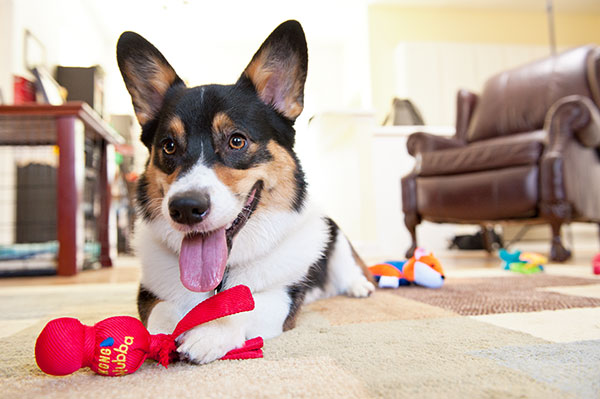 © Hot Dog Pet Photography, Modern on location Dog Portraits