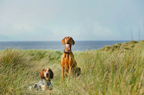 © Jonathan Yearsley Photography,  Dog-Bff's-at-the-beach