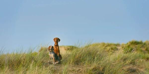 © Jonathan Yearsley Photography, Dog-Best-Friends