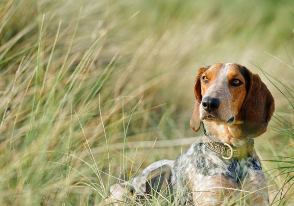© Jonathan Yearsley Photography, Fine-art-dog-photography
