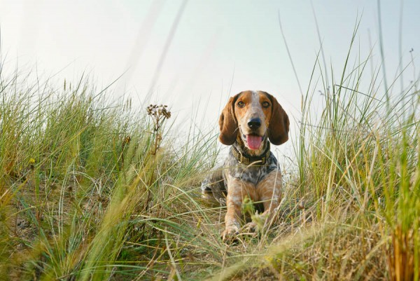 © Jonathan Yearsley Photography, Wales-canine-pet-portrait-photography