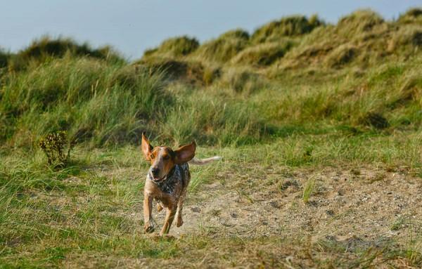 © Jonathan Yearsley Photography, Chestershire-Canine-Photography