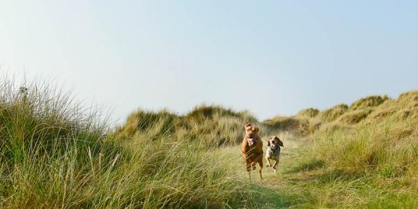 © Jonathan Yearsley Photography, Canine-Fine-Art-Photography