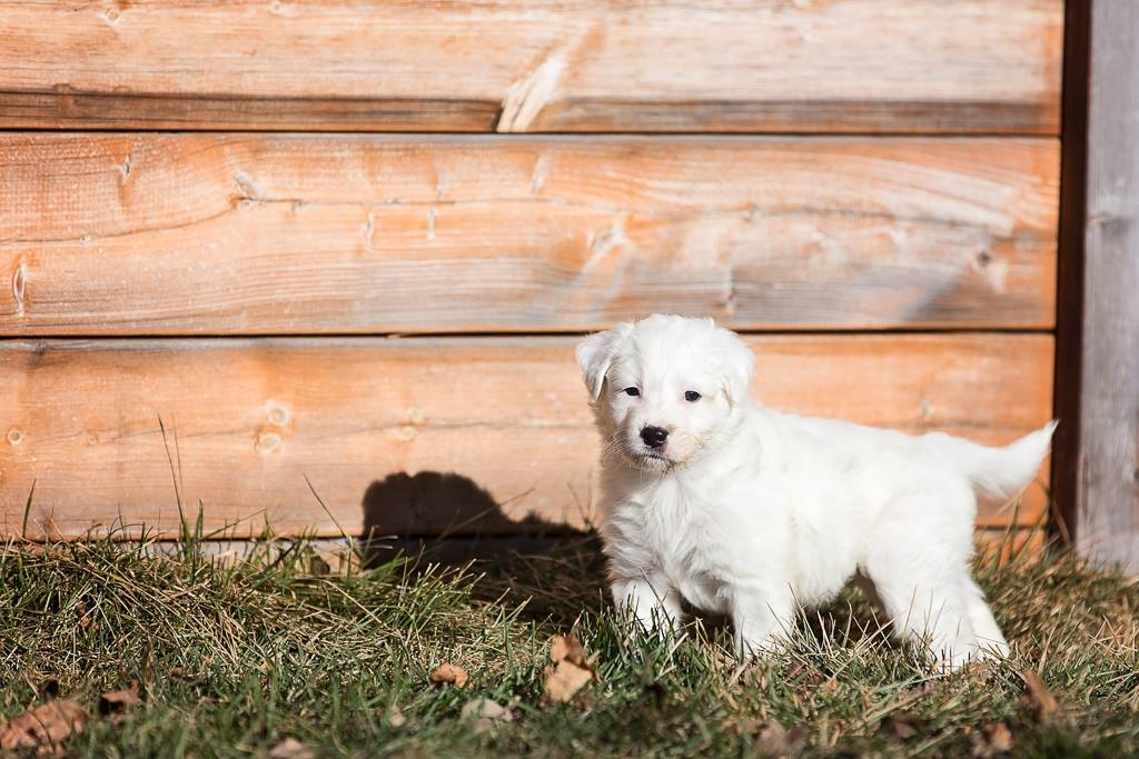 © Paws On The Run Photography, | Daily Dog Tag | Adoptable Puppy from Windy City Canine Rescue, Alberta