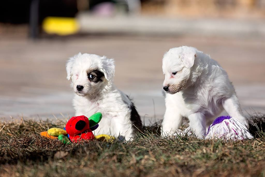 © Paws On The Run Photography, | Daily Dog Tag | Adoptable Puppies from Windy City Canine Rescue, Alberta