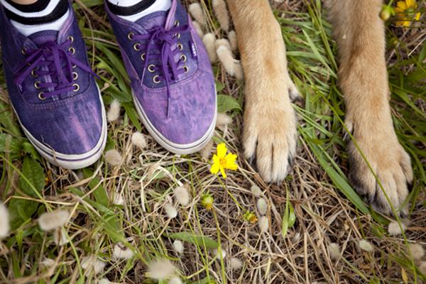 © Petal Photography, | Daily Dog Tag |, Sydney-Lifestyle-Photography