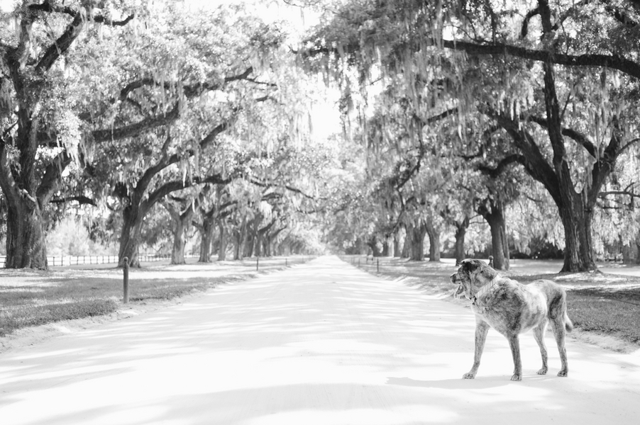 © Britt Croft Photography, Charleston-dog-photography