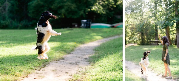 © Caroline Lima Photography, | Daily Dog Tag |, Springer-Spaniel,