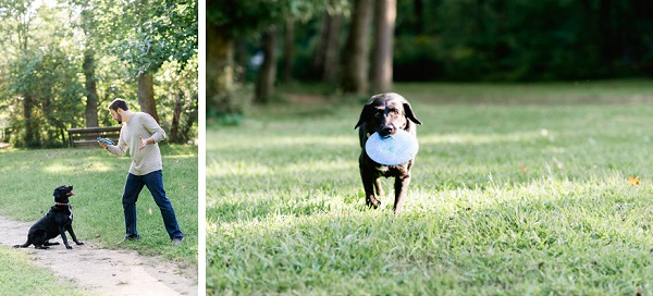 © Caroline Lima Photography, | Daily Dog Tag |, Rescued-Black-Lab-with-frisbee