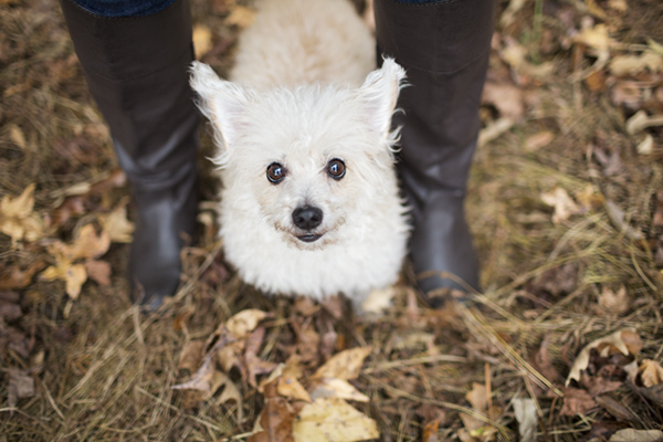 © McGraw Photography | Daily Dog Tag |  Lifestyle-Dog-Photographer