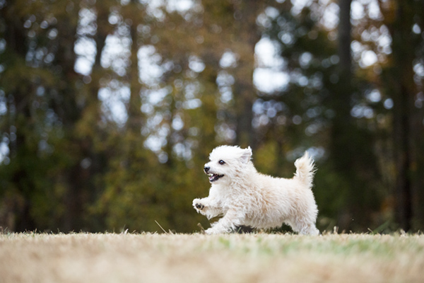 © McGraw Photography | Daily Dog Tag |  happy-dog-photography