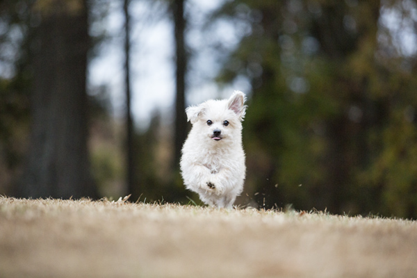 © McGraw Photography | Daily Dog Tag | little-dog-running
