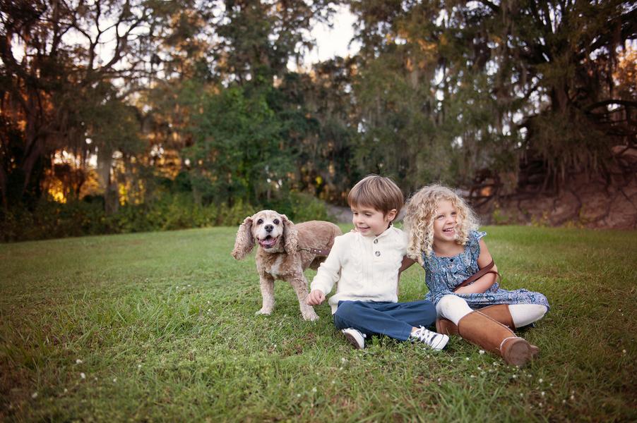 © Hamilton Creek Photography,   Daily Dog Tag   Cocker Spaniel and Twins