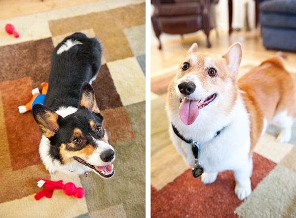 © Hot Dog Pet Photography, Orlando-Lifestyle-Pet-Photography