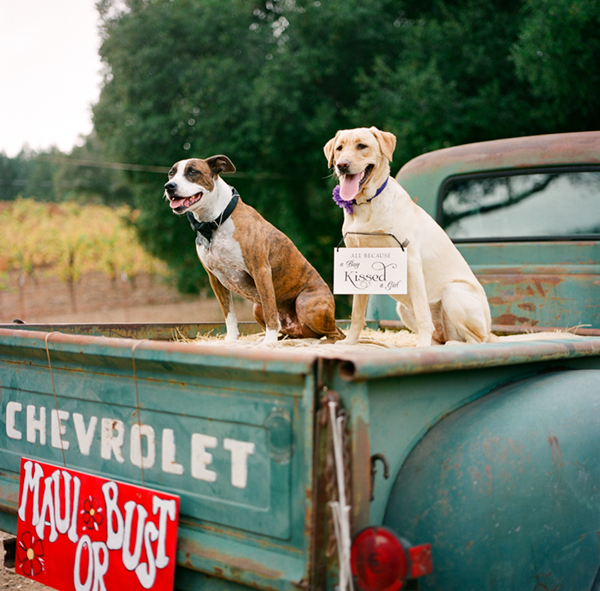 © Photo Lab Pet Photography, Pit Bull and Labrador Retriever