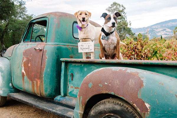 © Photo Lab Pet Photography, 2 dogs and a Chevy