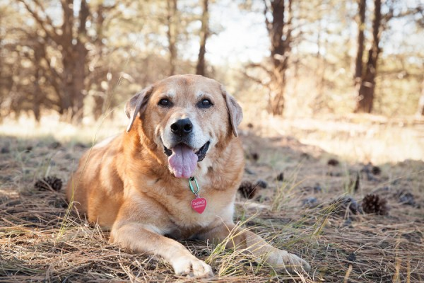 Happy Tails:  Clancy