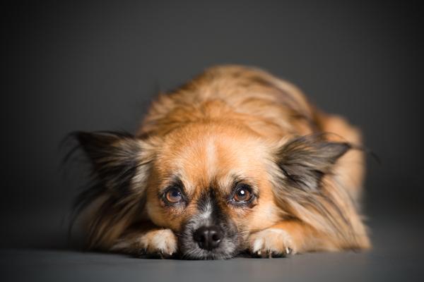 © Westway Studio, San Diego lifestyle and studio dog photography