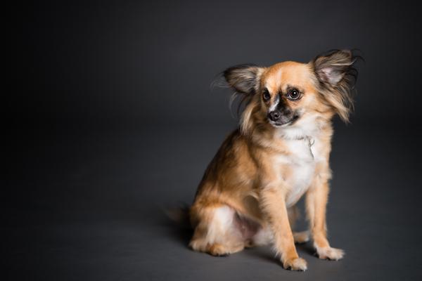 © Westway Studio, San Diego Pet Photography