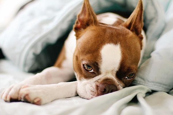 © Genevieve Elaine Photography, | Daily Dog Tag |, sleepy-dog
