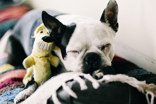 © Genevieve Elaine Photography, | Daily Dog Tag |, Santa-Monica-Lifestyle-Photography