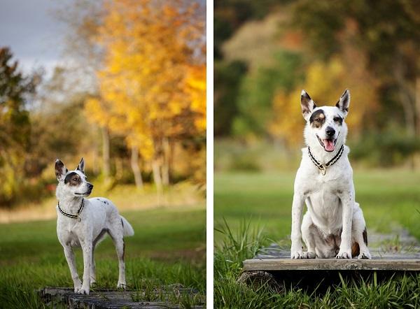 © Kathryn Schauer Photography, | Daily Dog Tag |, Autumn-dog-portraits