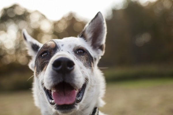 © Kathryn Schauer Photography, | Daily Dog Tag | Happy-dog