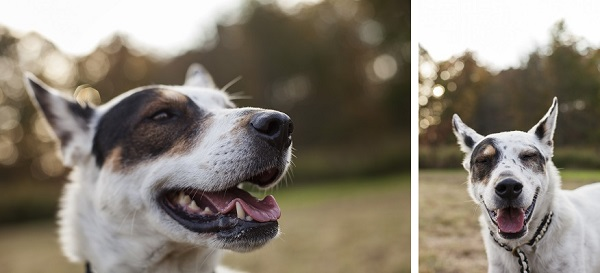 © Kathryn Schauer Photography, | Daily Dog Tag | dog-with-a-sense-of-humor