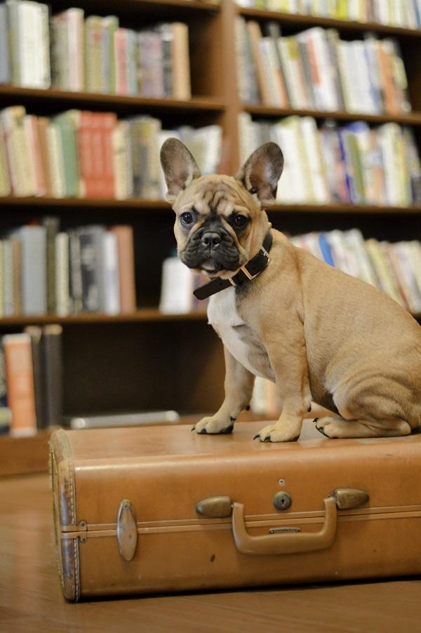 © Sleepy Dog Photography, | Daily Dog Tag | French-Bulldog