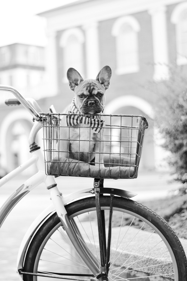 Puppy Love:  Winston