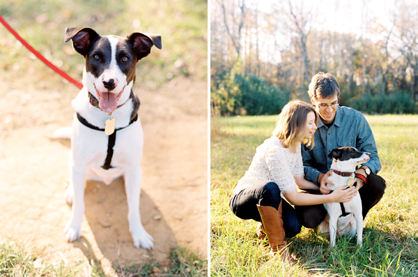 © Sarah Der Photography | Daily Dog Tag | English-Pointer/Border-Collie-mix
