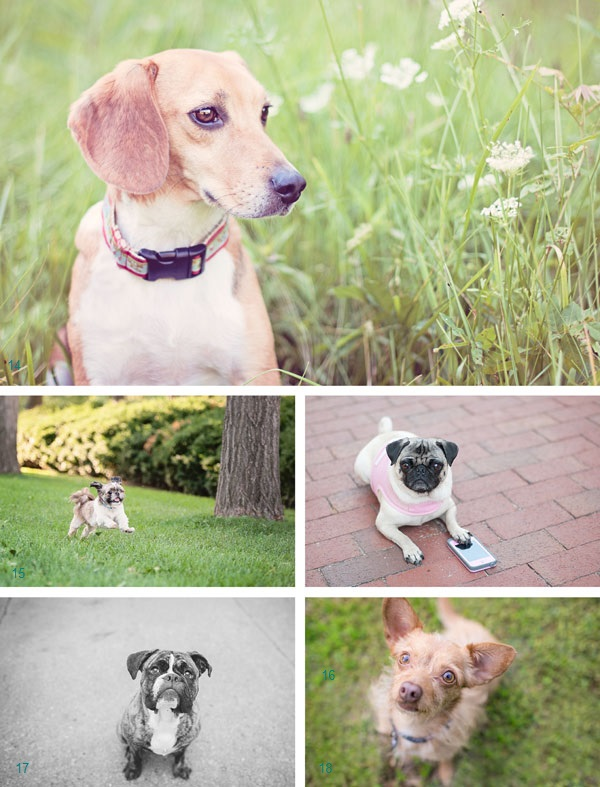 Pawsitively Amazing Nominees | Daily Dog Tag |