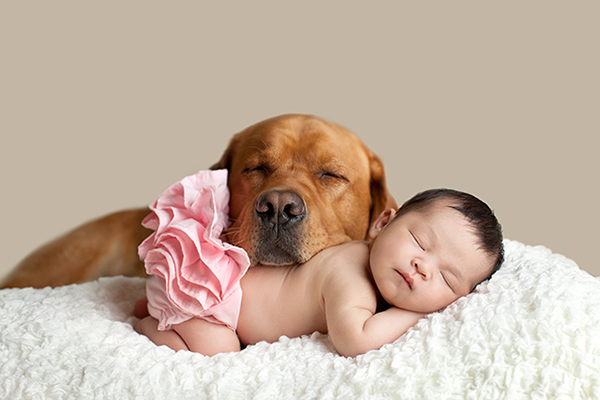 Labrador resting head on baby's back, dogs make the best friends, ©Cathy Murai Photography