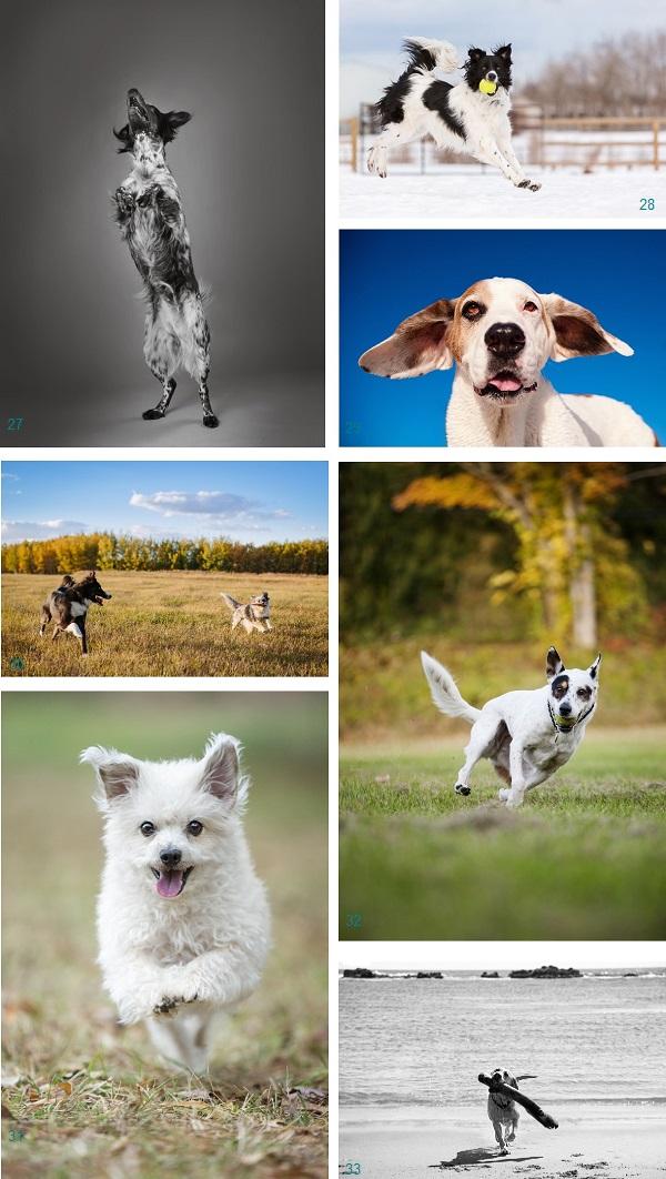 Best Stuntdogs  | Daily Dog Tag |