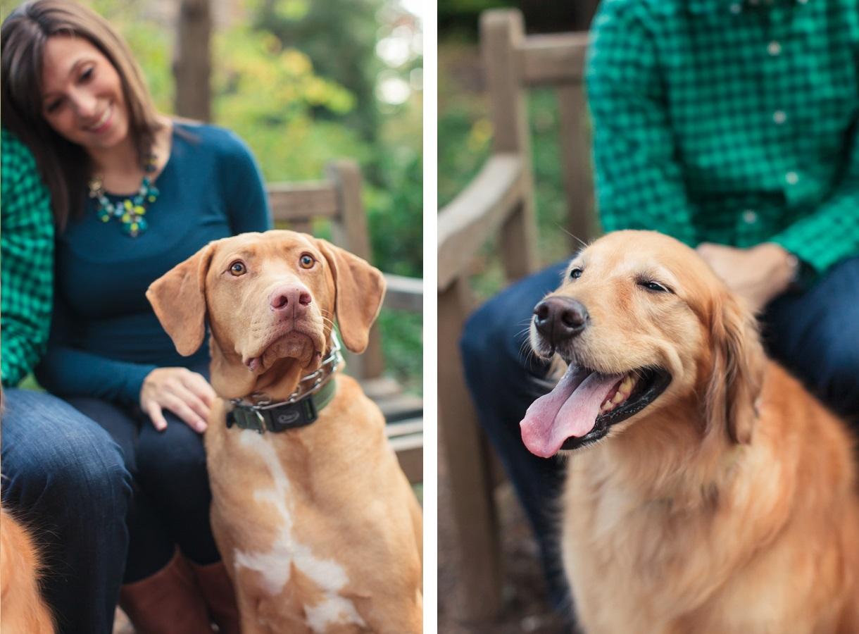 © Allison Mannella Photography   Daily Dog Tag   NC-dog-portraits,