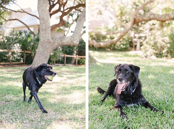 © Britt Croft Photography | Daily Dog Tag |  SC-Cherish-Session