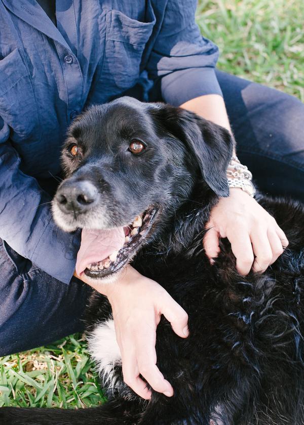 © Britt Croft Photography | Daily Dog Tag | Senior-Black-Lab