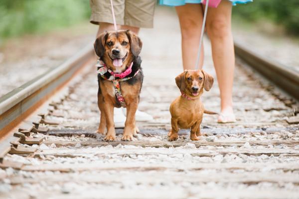© Caroline Lima Photography, | Daily Dog Tag | Engaging tails