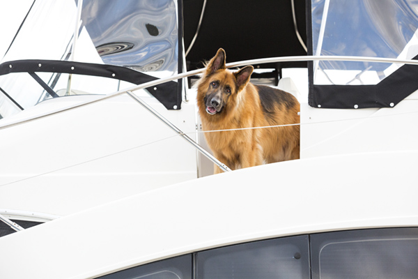 © McGraw Photography | Daily Dog Tag | German Shepherd on his boat